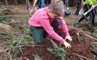 Den za obnovu lesa